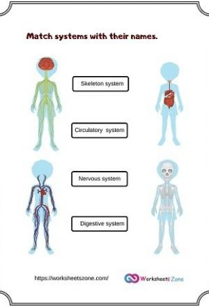 human body systems worksheet