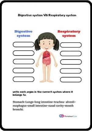 download free digestive system and respiratory system worksheet