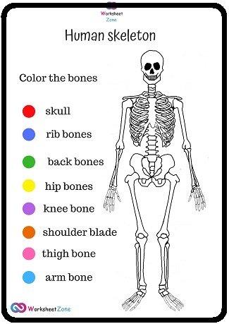 Coloring science worksheets skeleton