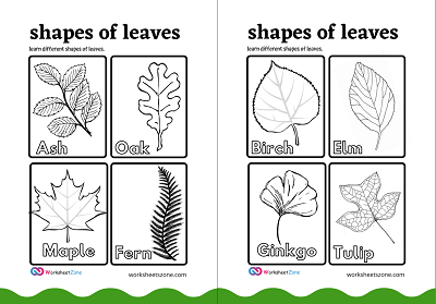 Types Of Leaves  free Worksheet