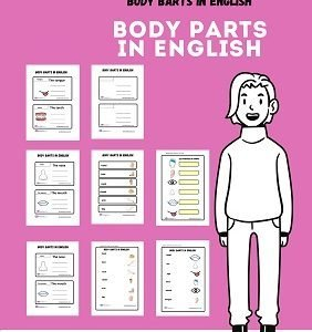 English BODY PARTS  worksheets